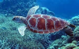 Blog Turtle 1